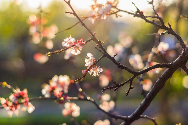 thés du moment printemps
